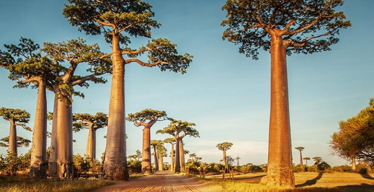 Circuit Madagascar Circuite Madagascar Madagascar