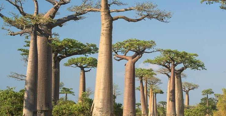Circuit Madagascar Circuite Madagascar Madagascar imagine 4