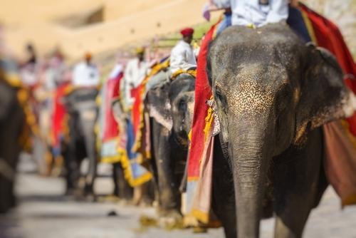 Pachet promo vacanta Circuit India - Misterele Rajasthanului Circuite India India imagine 8