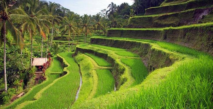 Pachet promo vacanta Singapore si Bali Bali Indonezia imagine 3