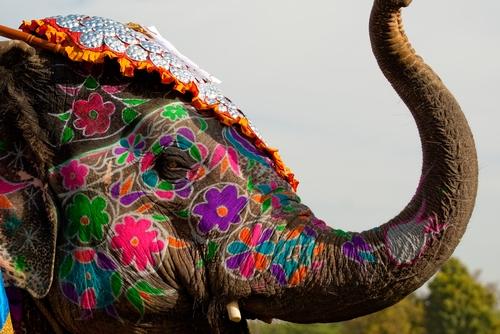 Pachet promo vacanta Marele Tur al Indiei Circuite India India imagine 2