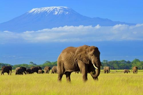 Safari si Sejur Kenya Nairobi Kenya