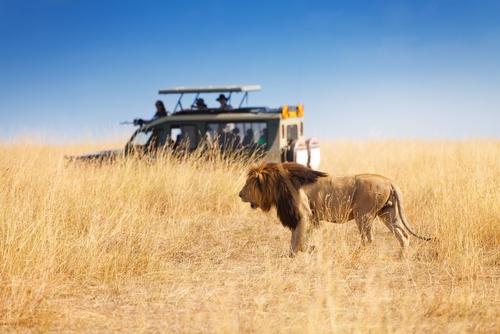 Safari si Sejur Kenya Nairobi Kenya imagine 3