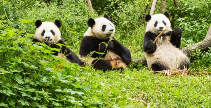 Pachet promo vacanta Circuit China - Beijing, Xian, Chengdu si Shangai Circuite China China